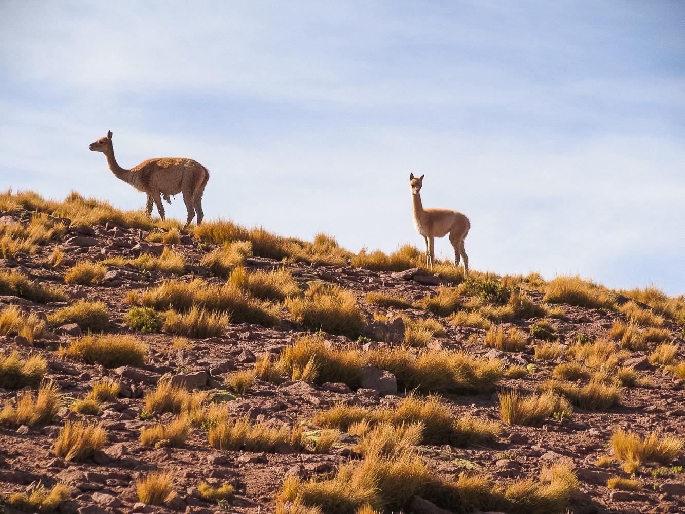 Geysers del Tatio no Deserto do Atacama