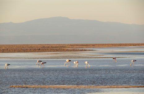 Salar do Atacama (Laguna Chaxa) no Deserto do Atacama