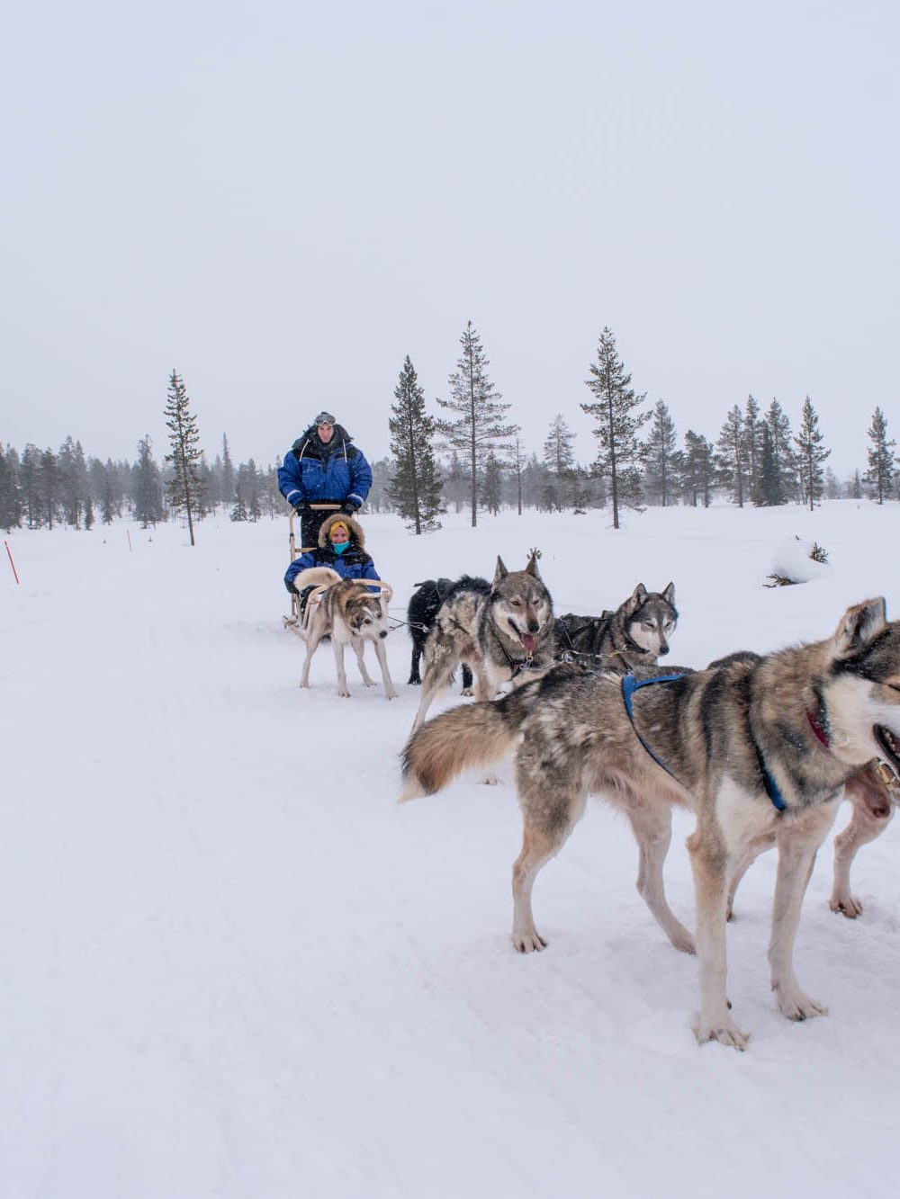 Passeio com huskies: vale a pena fazer?