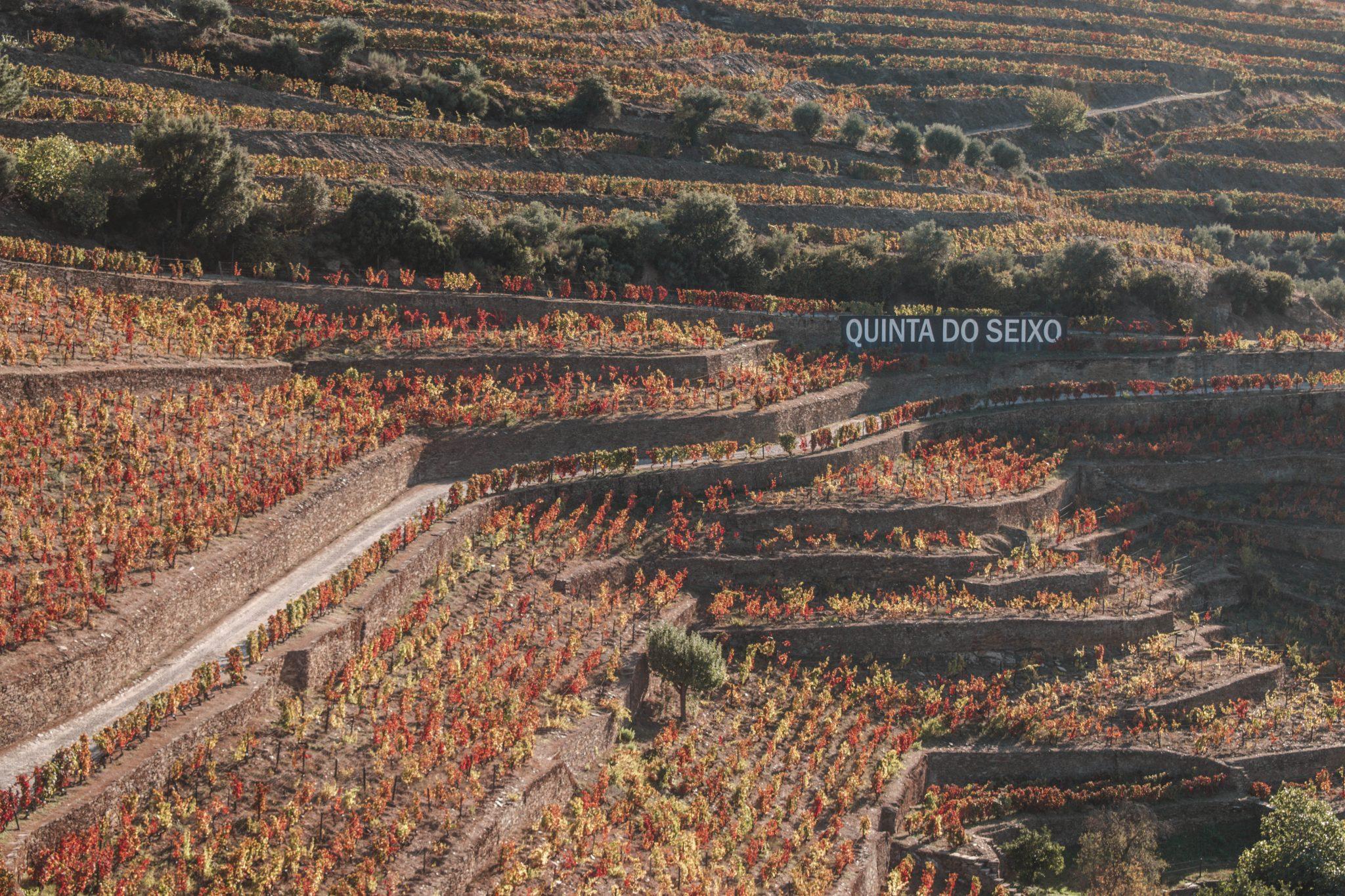 Melhores vinícolas no Vale do Douro Portugal