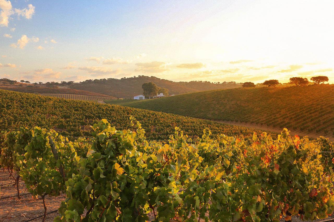 Alentejo em Portugal dicas de viagem, vinícolas e roteiro de 2 a10 dias